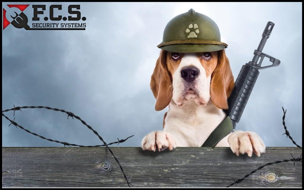 σκύλος συναγερμός